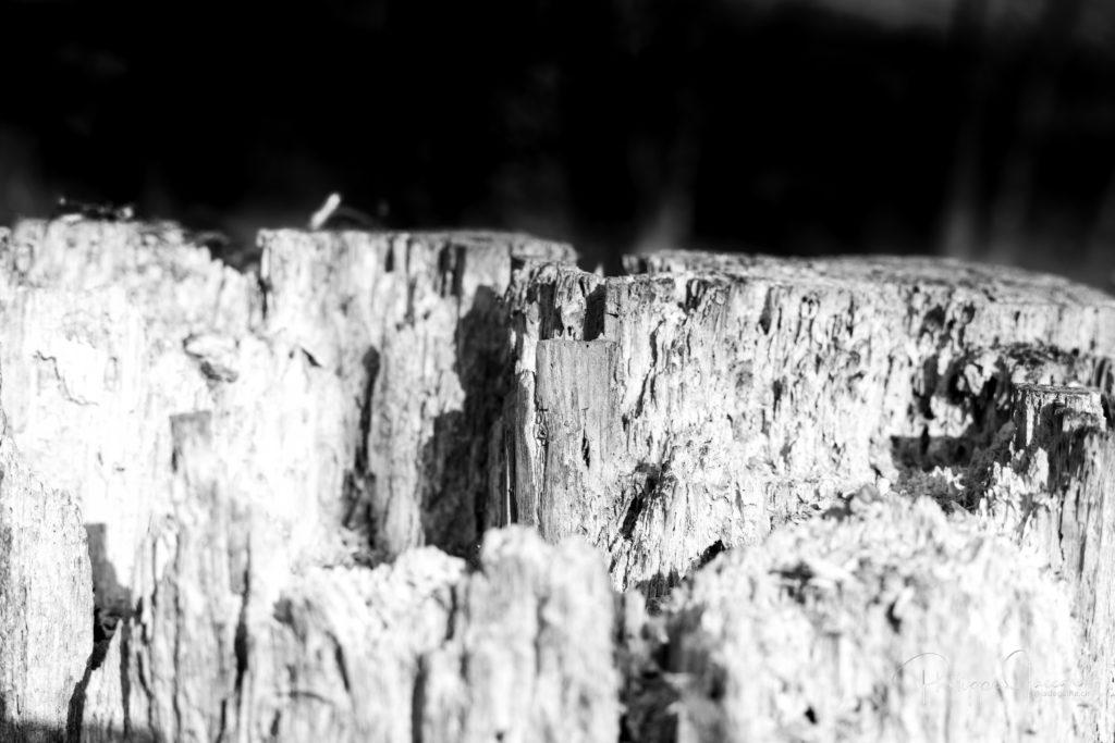 Cette souche en noir et blanc fait fait penser aux falaises désertiques du hoggar @ près de chez moi – Hoggar par Philippe Jaccard