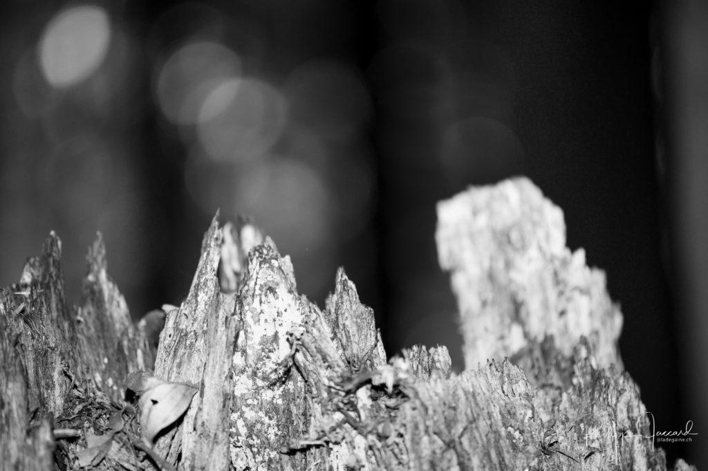 Ces écorces découpées donnent la perception d'une chaîne d'aiguilles granitiques de la vallée de Chamonix (Par Phili Montagnes de nos forêts @ près de chez moi - Aiguilles de Chamonix par Philippe Jaccard
