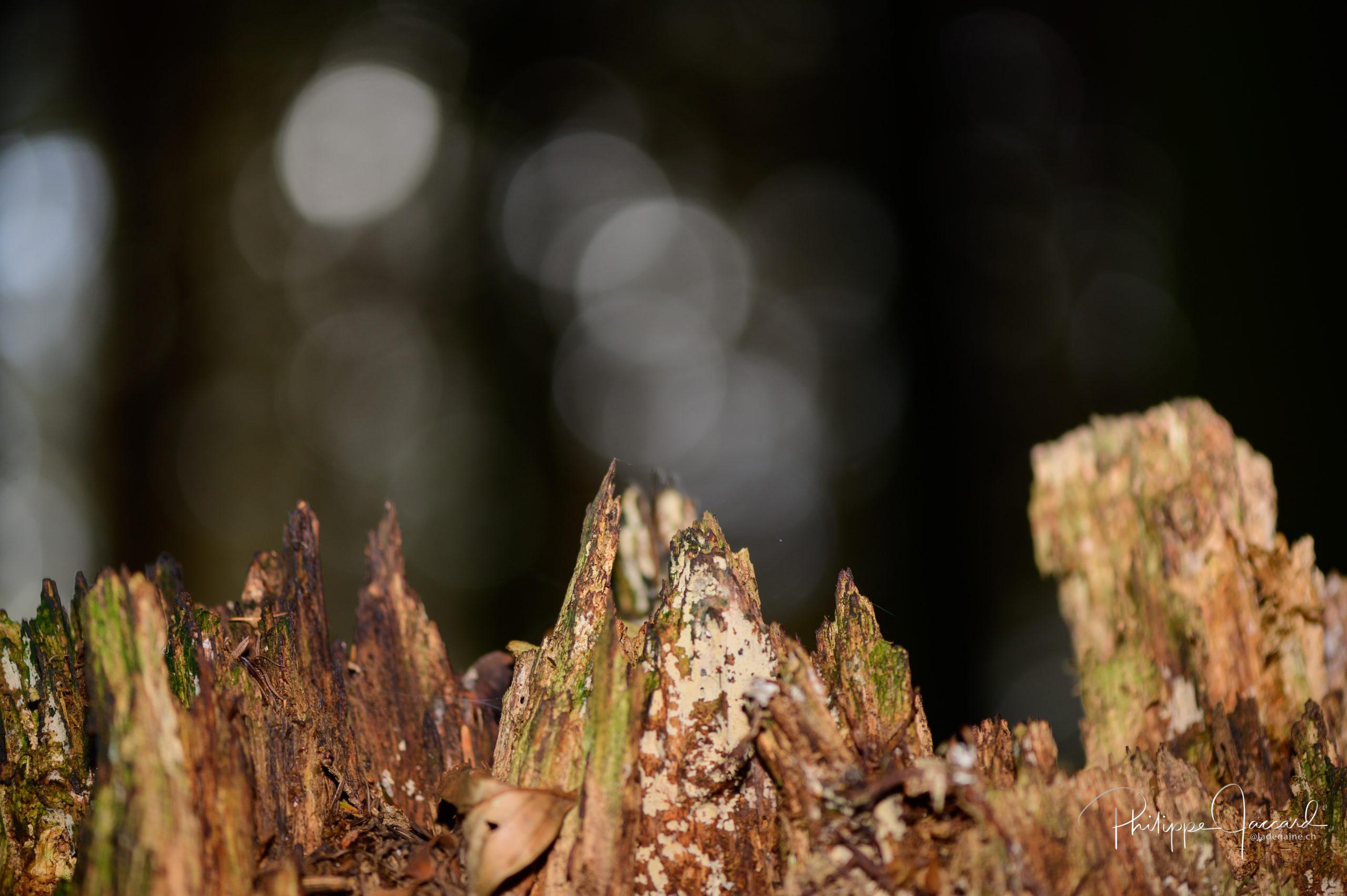 Ces écorces découpées donnent la perception d'une chaîne d'aiguilles granitiques de la vallée de Chamonix (Par Philippe Jaccard)