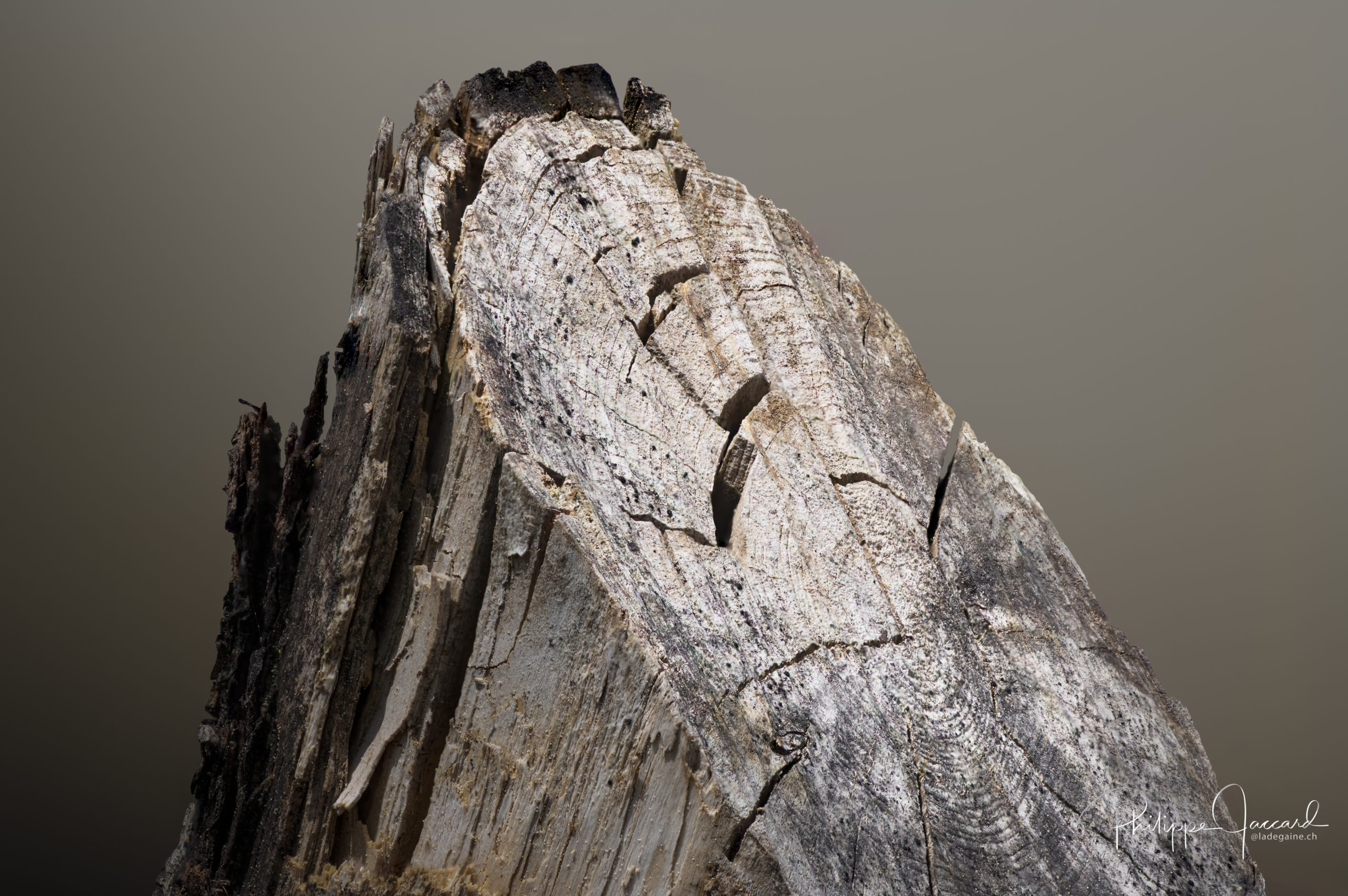 Montagnes de nos forêts @ près de chez moi – Près du sommet par Philippe Jaccard
