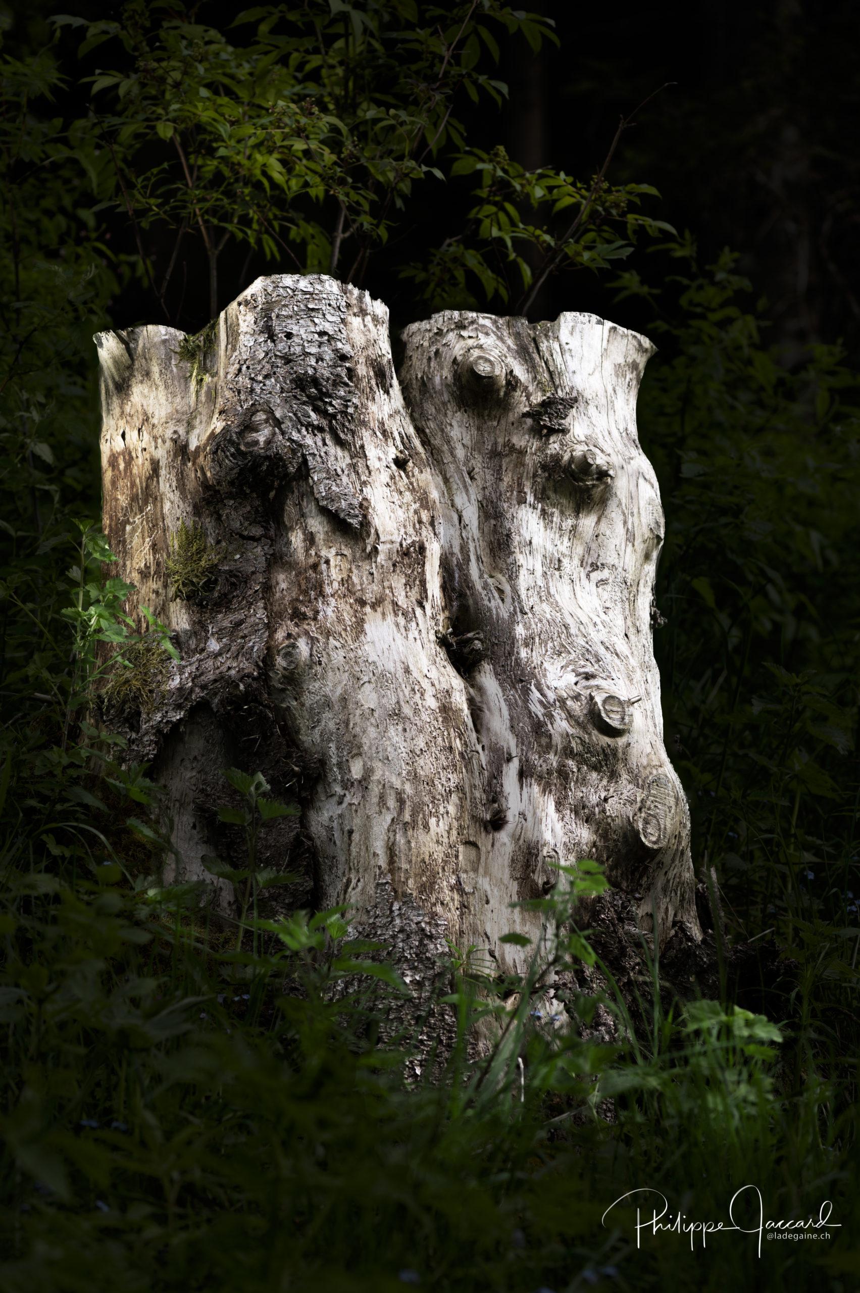Présences de nos forêts @ près de chez moi – tete a tete par Philippe Jaccard