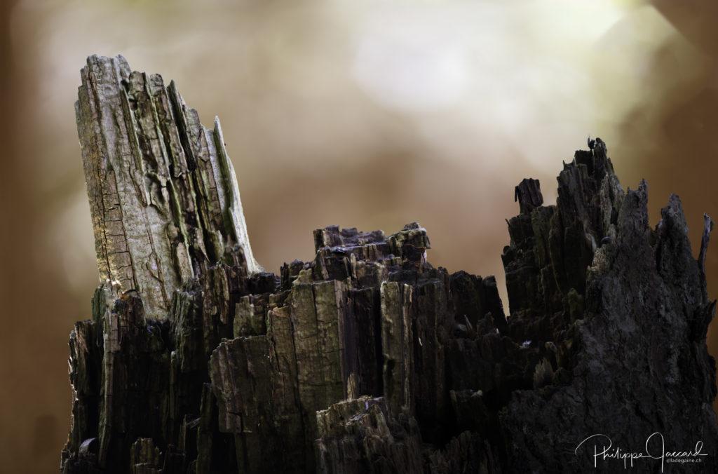 Montagnes de nos forêts @ près de chez moi – Veisivi par Philippe Jaccard