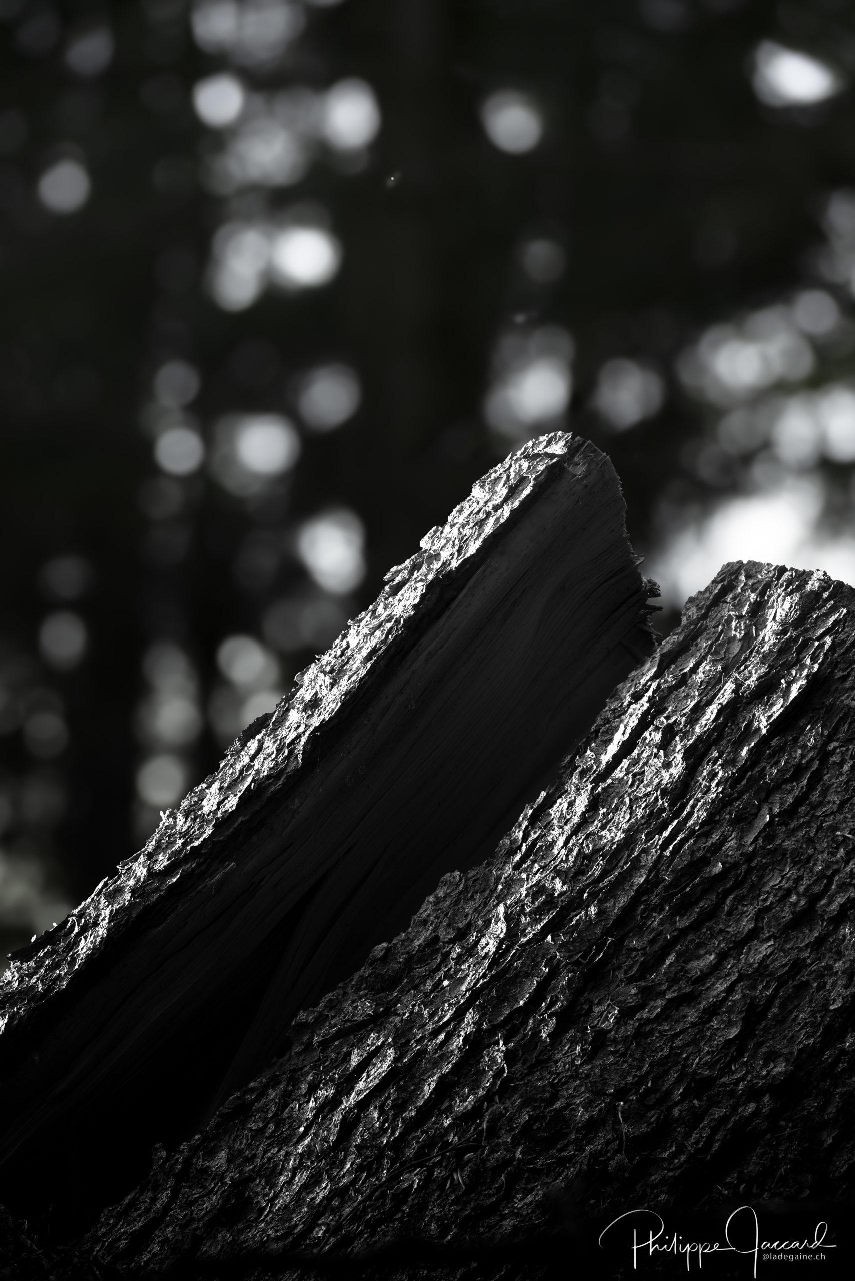 Montagnes de nos forêts @ près de chez moi – Face nord par Philippe Jaccard
