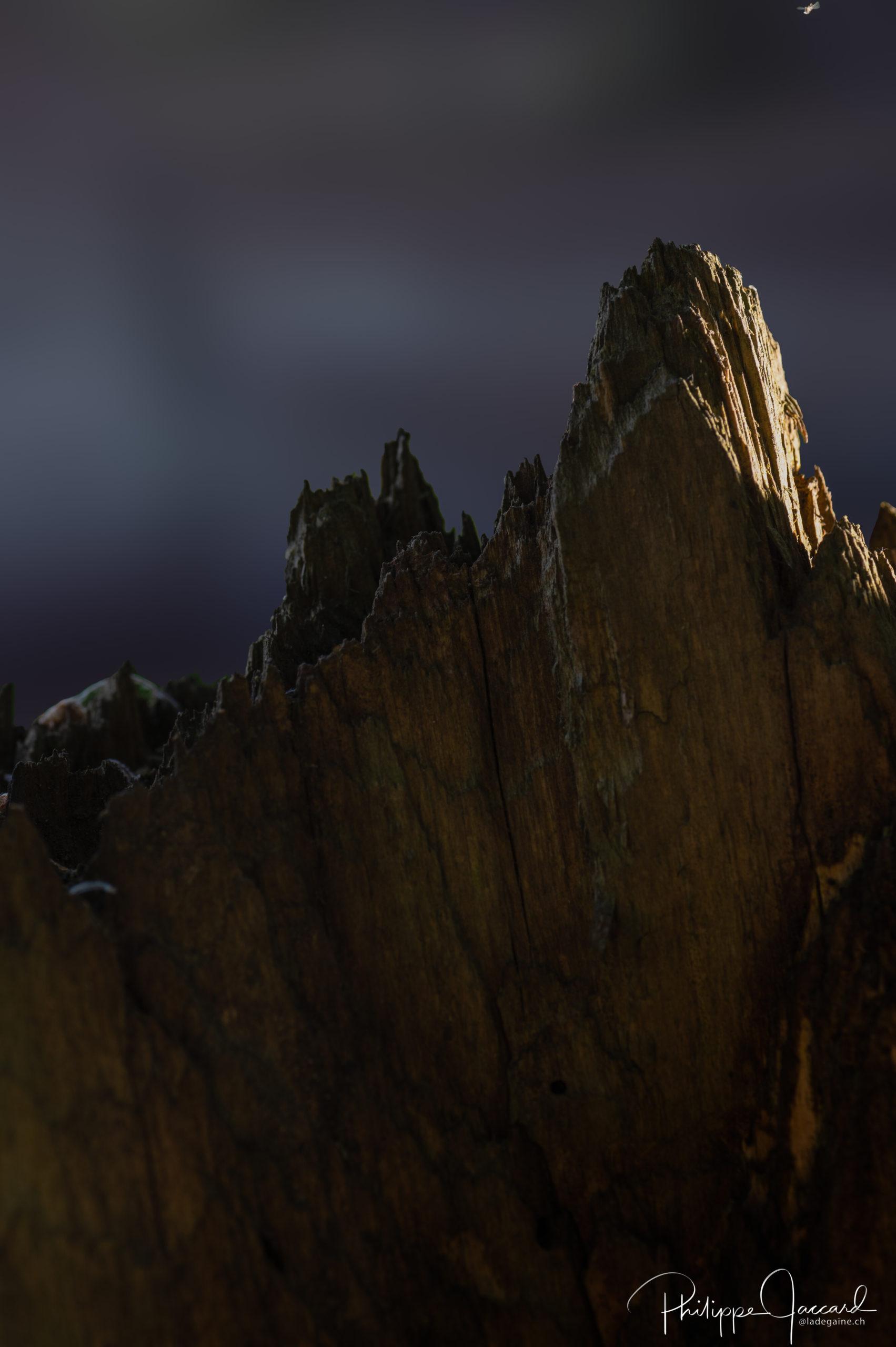 Montagnes de nos forêts @ près de chez moi – Face sud du fou par Philippe Jaccard