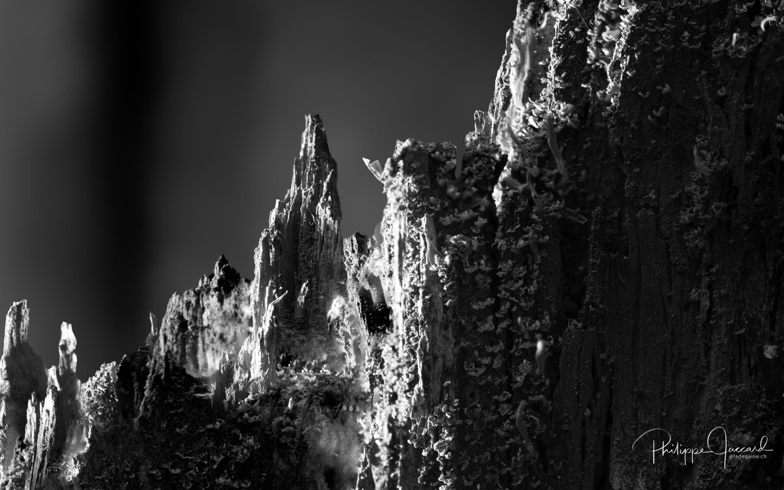 Montagnes de nos forêts @ près de chez moi – Envers du plan par Philippe Jaccard