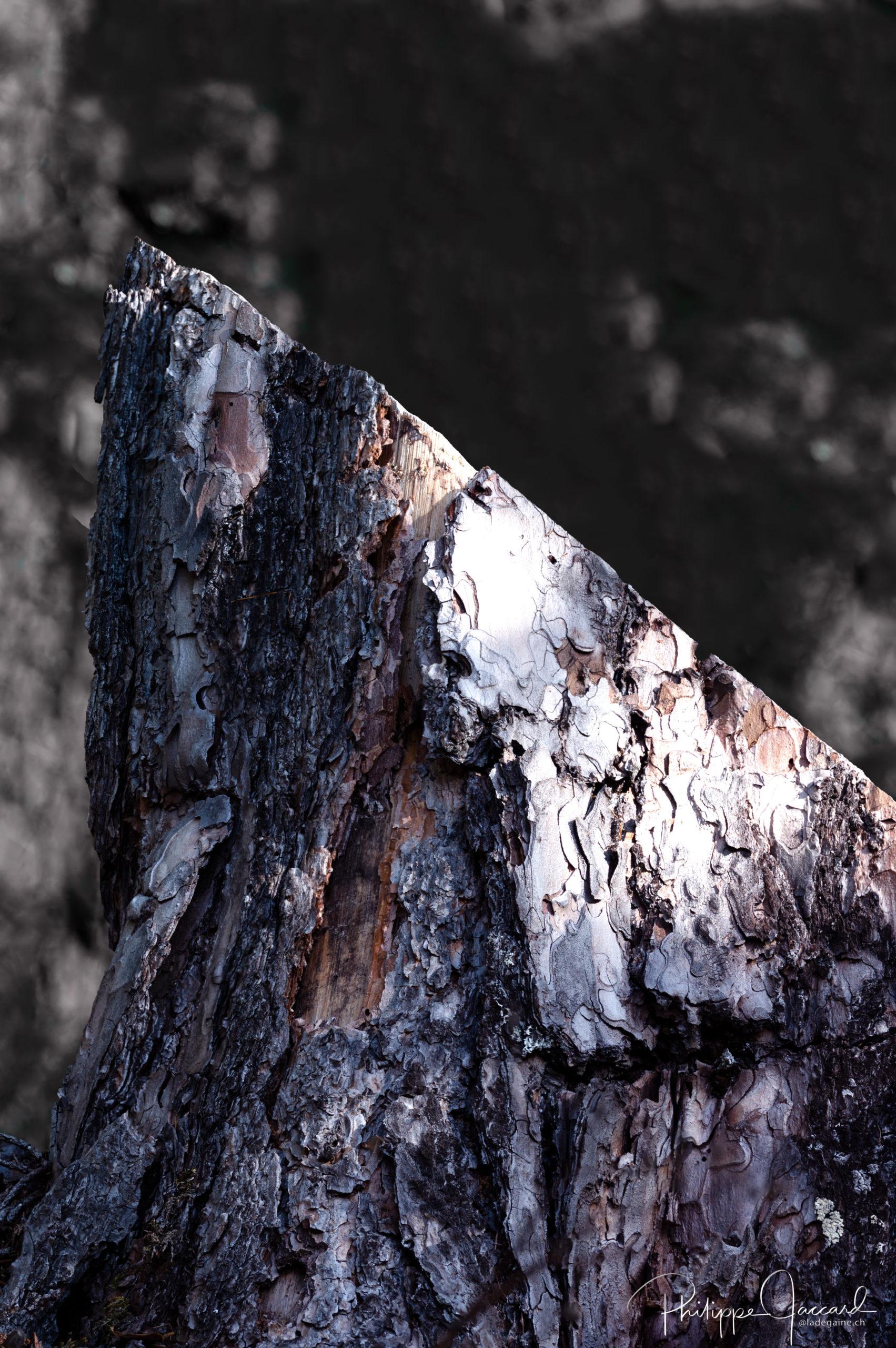 Montagnes de nos forêts @ près de chez moi – Portalet- par Philippe Jaccard