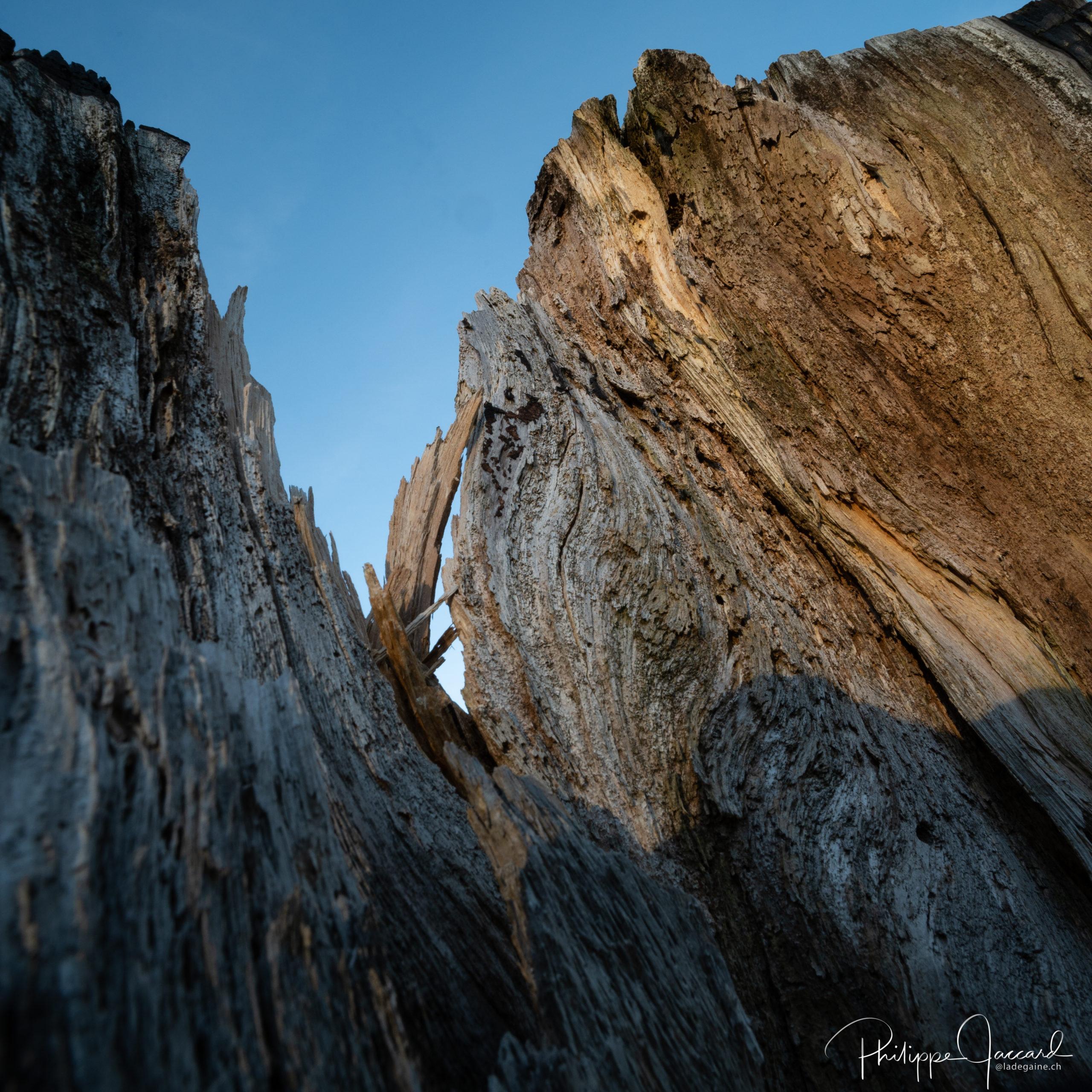 Montagnes de nos forêts @ près de chez moi – Granit - par Philippe Jaccard